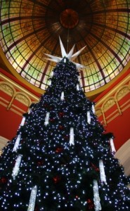 Christmas Tree Sydney