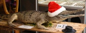 Christmas Crocodile In Kuranda